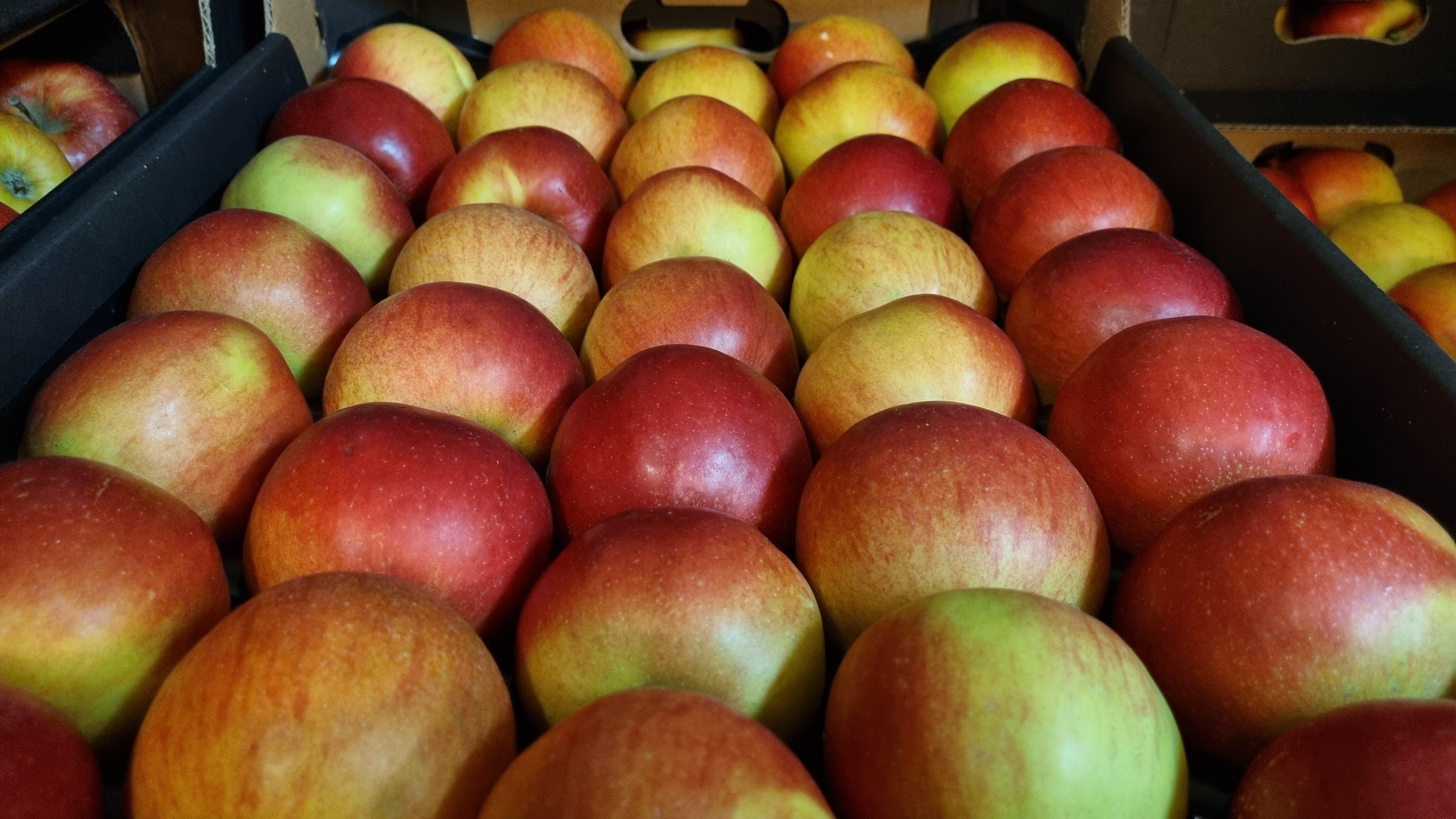 Jablko 70/80 červ. IDARED PLATO vybarvené 90%