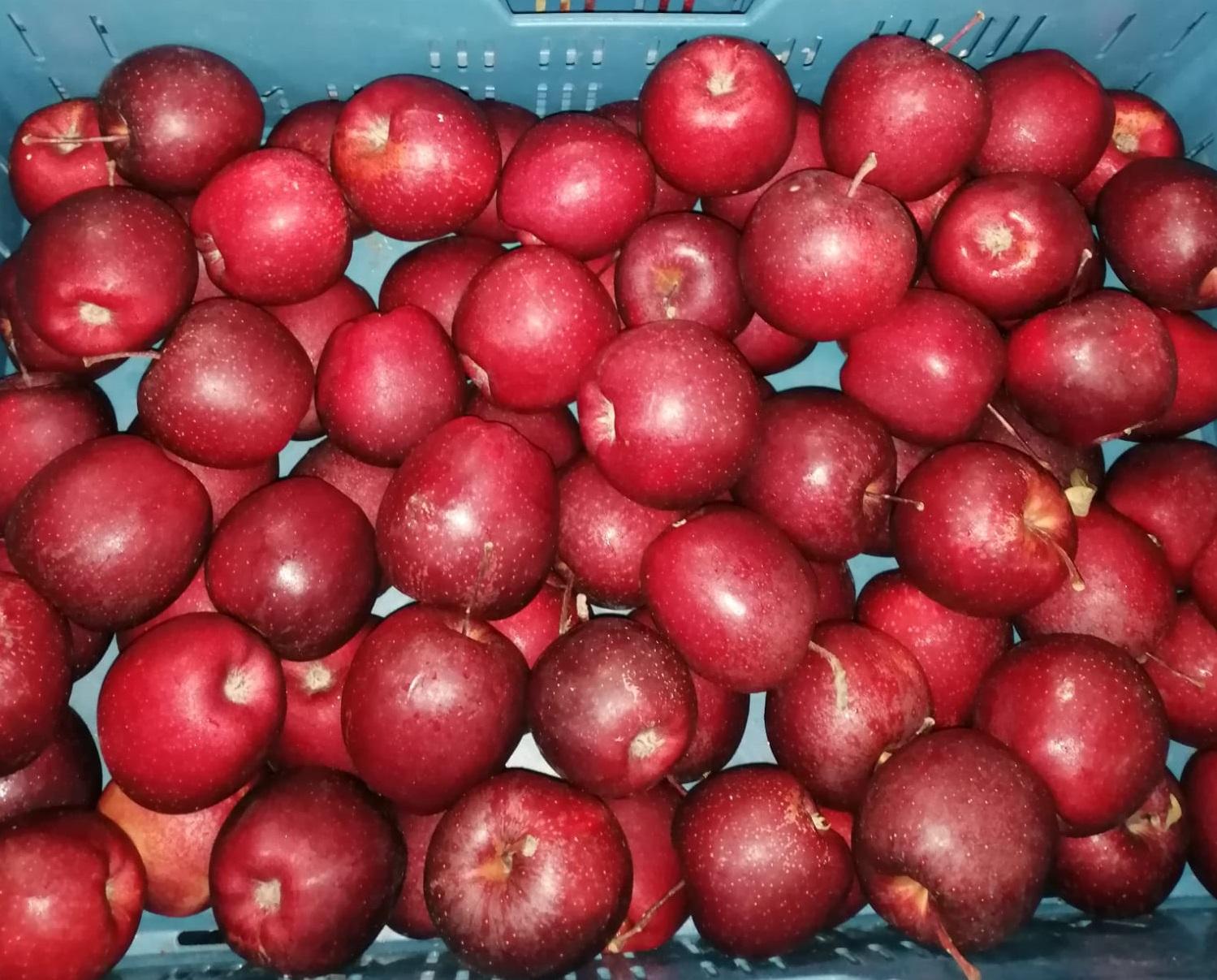 "Jablko 72+ ""KG"" GALA SHNIGA sladké 90% červ. SYPANÉ BOX ""MERCEDES"""